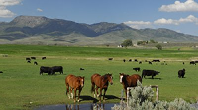 Productive Idaho Ranch only 2 hours from Salt Lake City, Utah