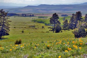 Montana property for sale that provides many opportunities