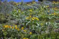 Wildflower habitat all over on this Montana land for sale