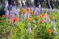 Abundant wild flowers on this Montana ranch for sale