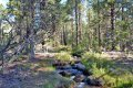 Natural water running through the Utah ranch for sale
