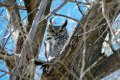 Big horn owl watches from above on this Montana farm for sale