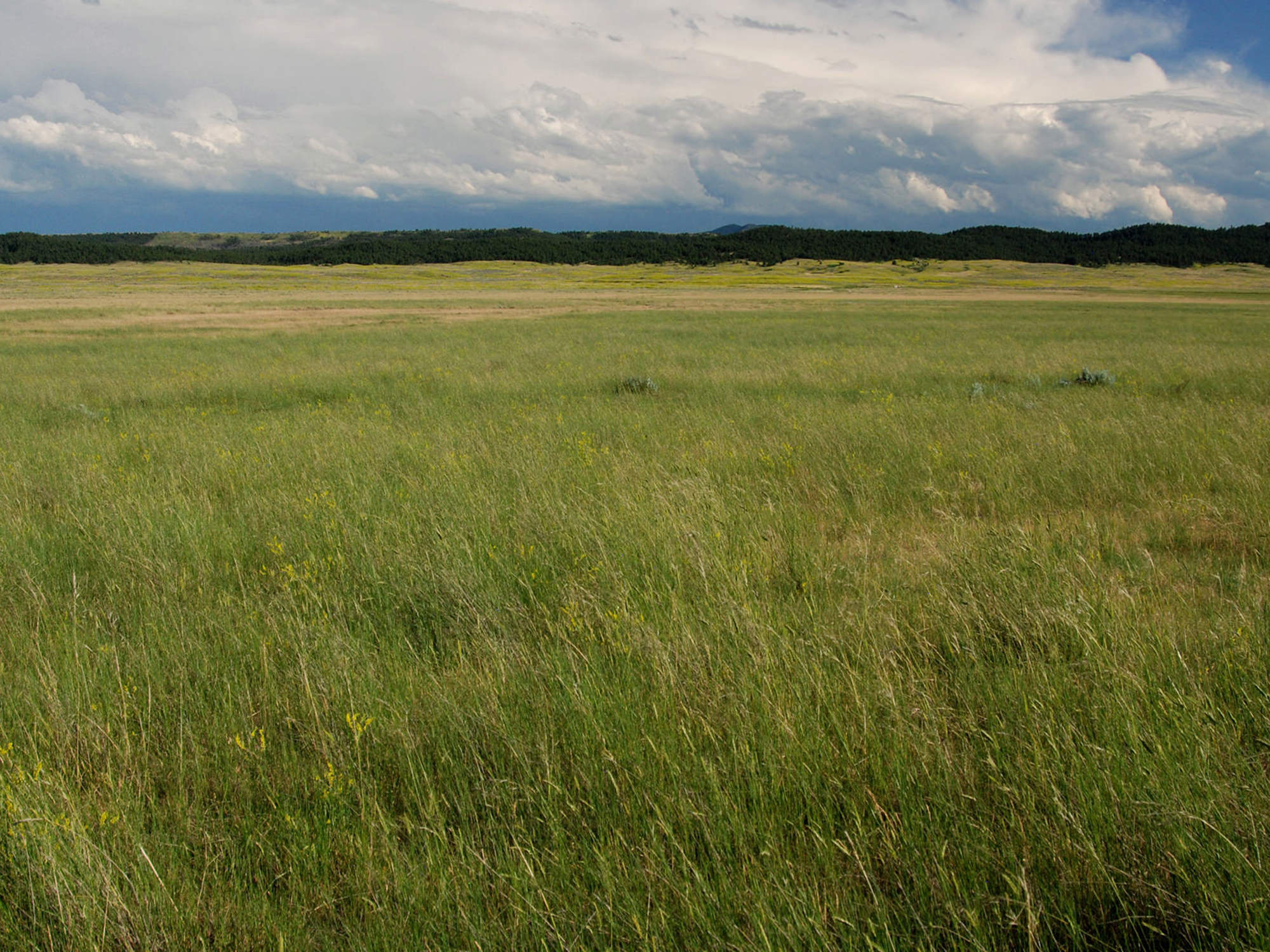 Montana fergus county grass range - Great Space For Grazing Livestock On This Montana Land For Sale