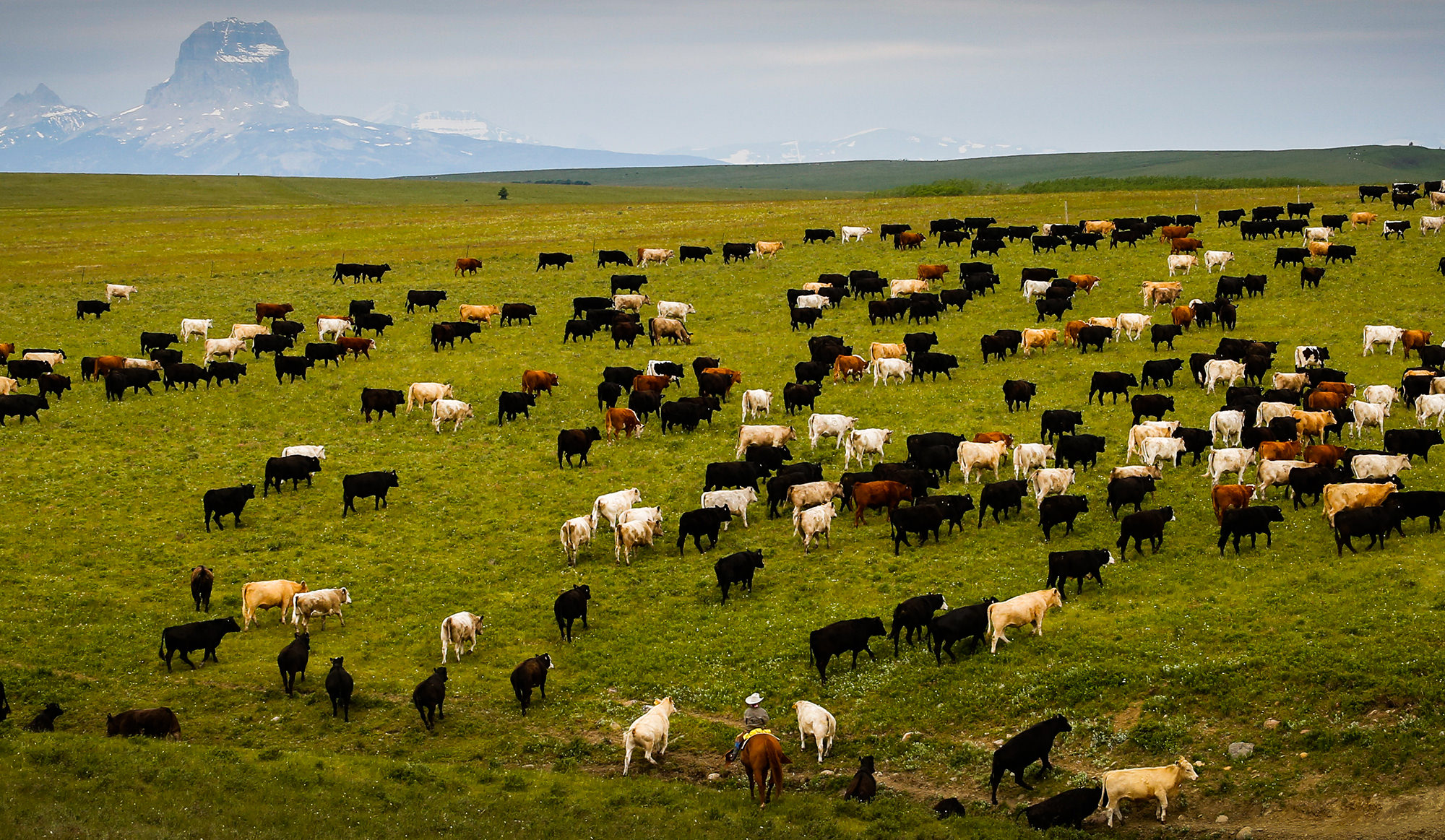 Montana Cattle Ranch Property For Sale: North Fork Ranch