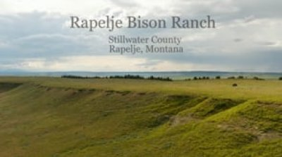 Rapelje Bison Ranch near Rapelje, Montana
