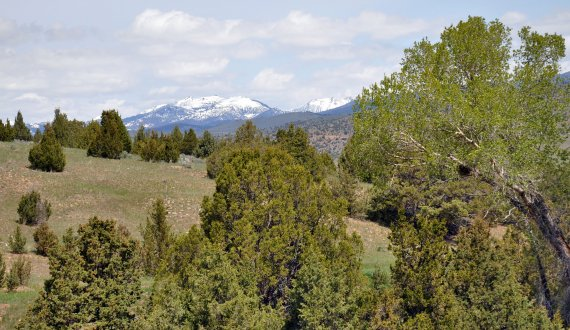 Montana ranch for sale with a healthy tree stand