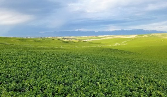 Productive fields on this Montana farm for sale