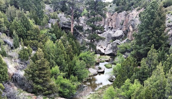 Wildlife habitat on this Wyoming ranch for sale