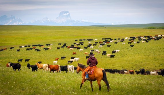 Montana Ranches, Farms and Recreational Properties For Sale
