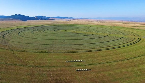 Montana ranch for sale with a combination of alfalfa and grass hay