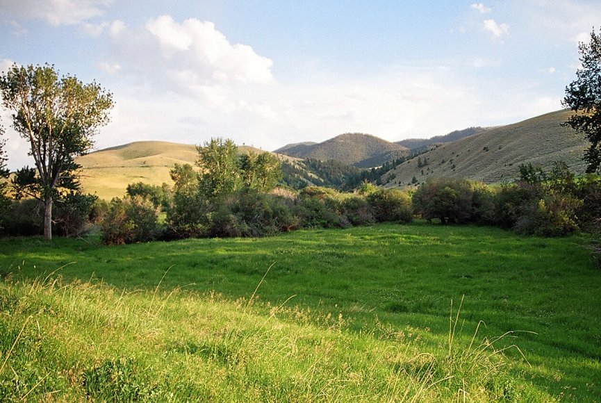 Productive fields for grazing on this Montana ranch for sale
