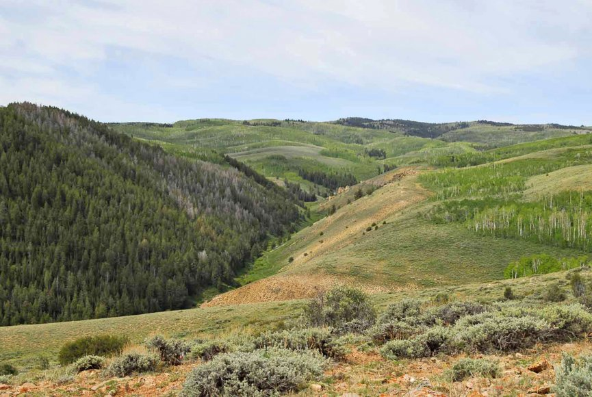 Hunting opportunity on this Utah land for sale
