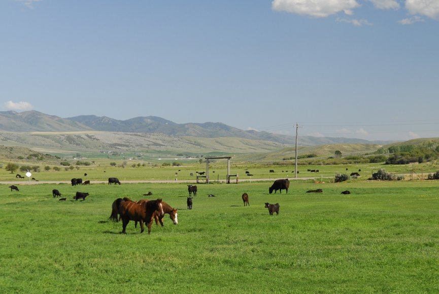 The horses are out to pasture on this Idaho ranch for sale