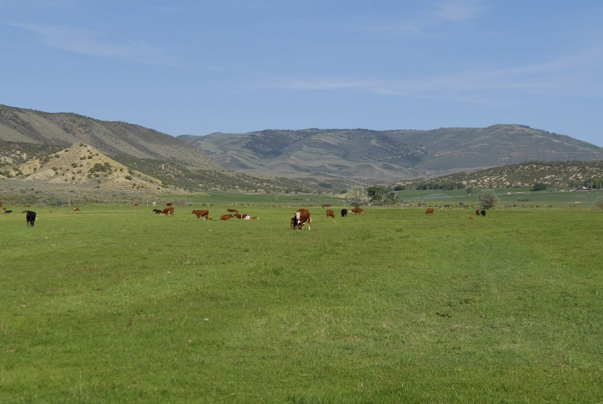 Field sways in the breeze on this Utah ranch for sale