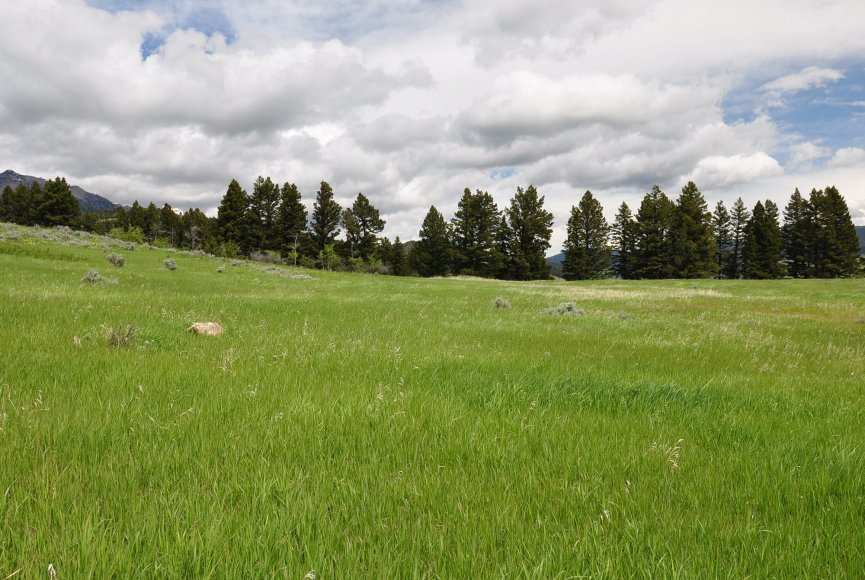 Montana property for sale in a peaceful setting listed by Swan Land Company