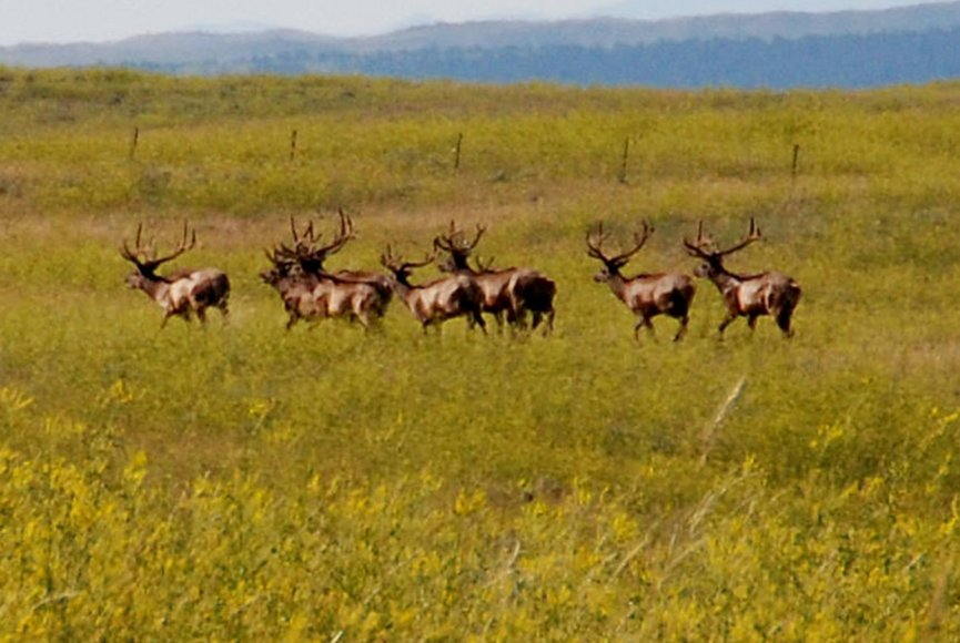 Wildlife habitat on this Montana ranch for sale attracts big game