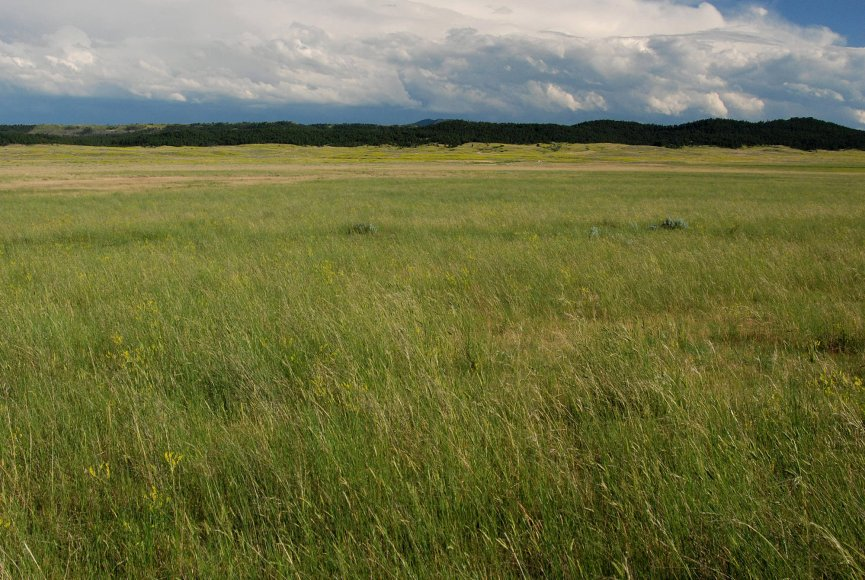 Grass swaying in the breeze on this Montana land for sale