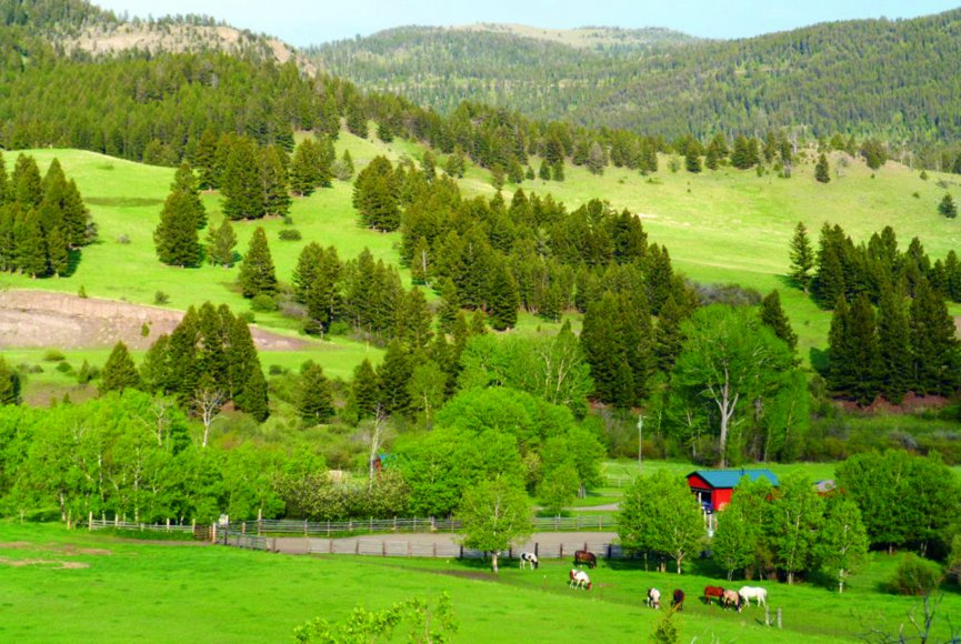 Luscious green landscape on this Montana ranch for sale