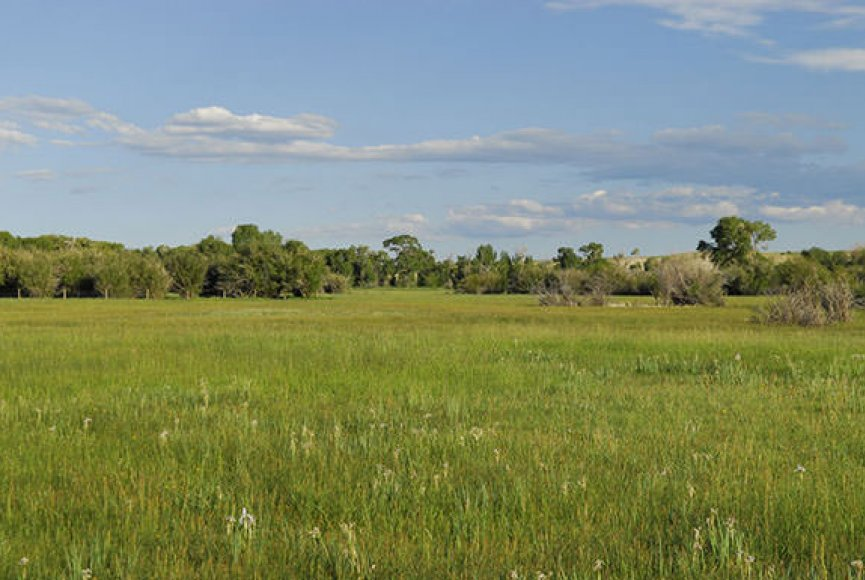 Grass swaying in the breeze on this Wyoming land for sale