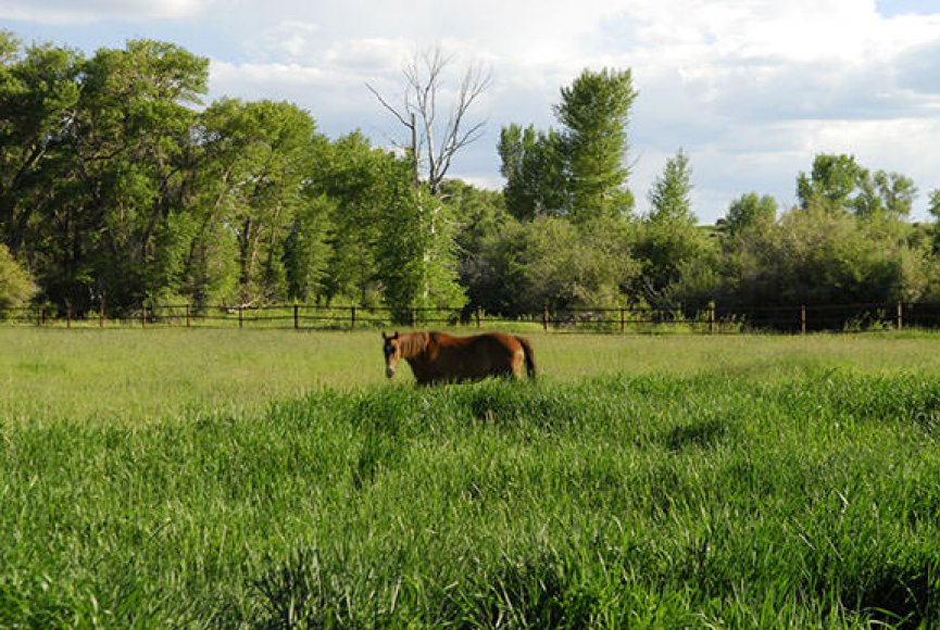 A grazing horse enjoying the afternoon on this Wyoming land for sale