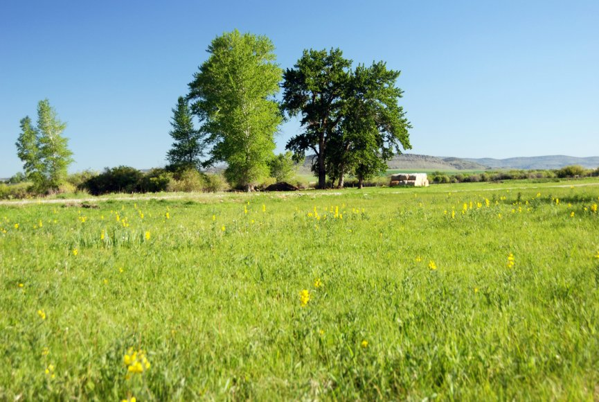A calm meadow on this Montana property for sale