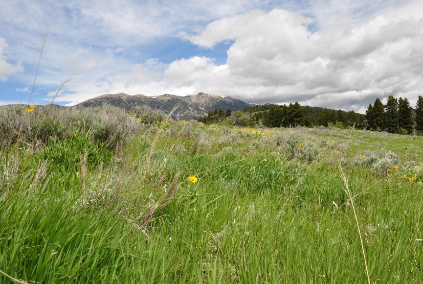 Mountain property for sale in Montana attracts wildlife