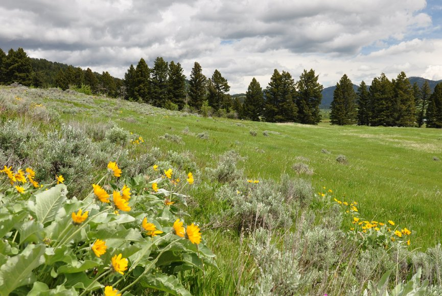 Prime mountain property for sale listed by Swan Land Company