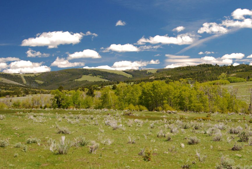 Montana ranch for sale with an abundance of grasslands
