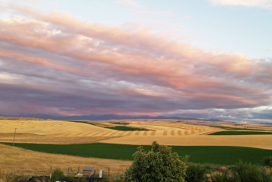 Picture perfect farm fields on this Montana property for sale