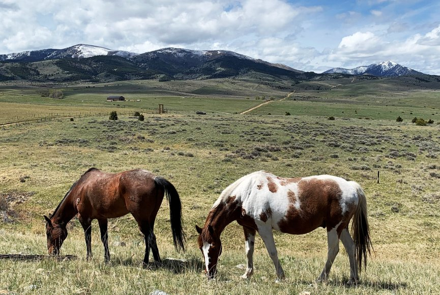 Spacious Montana land for sale listed by Swan Land Company
