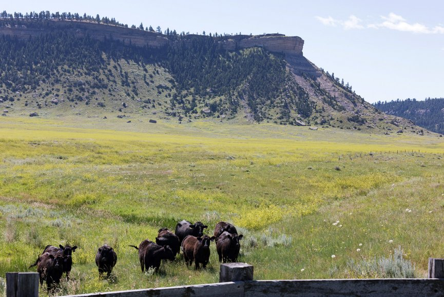 Experience the Montana way of living on this Montana ranch for sale