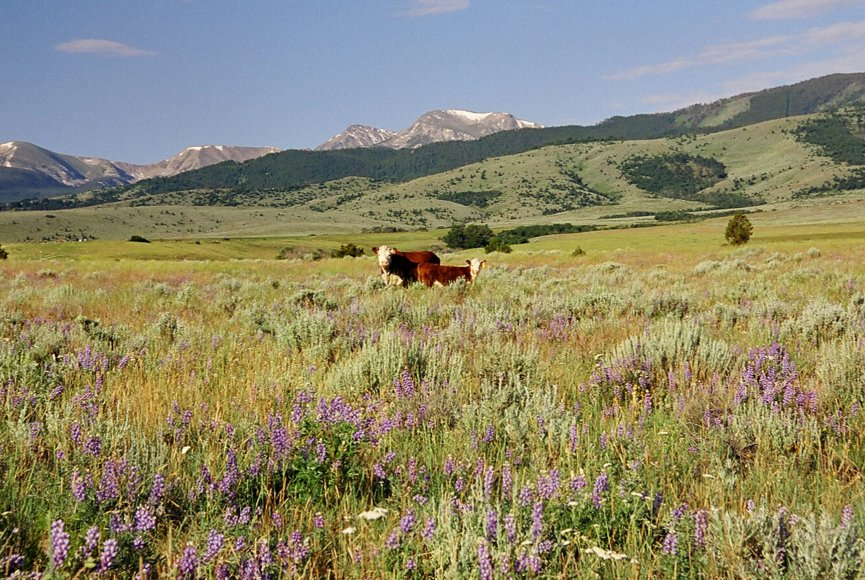 Montana property for sale in a stunning location