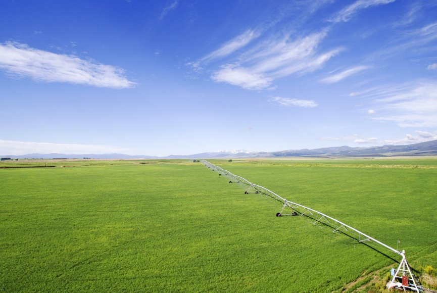 Healthy crops on this Montana ranch for sale