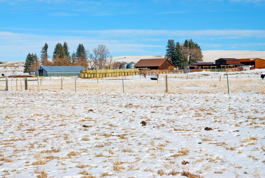 Montana farm for sale listed by Swan Land Company
