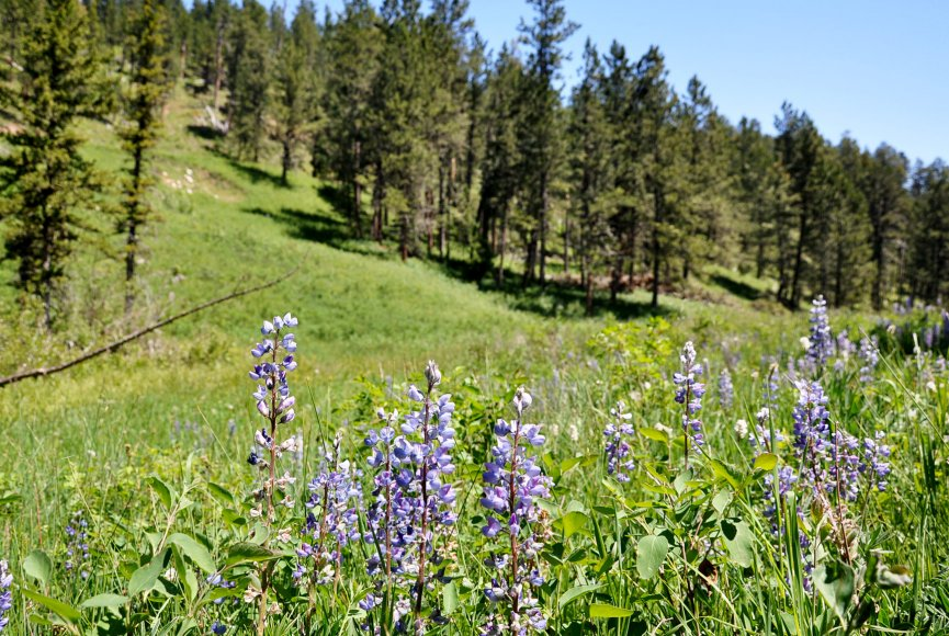 Ranch for sale in Montana with wildflowers