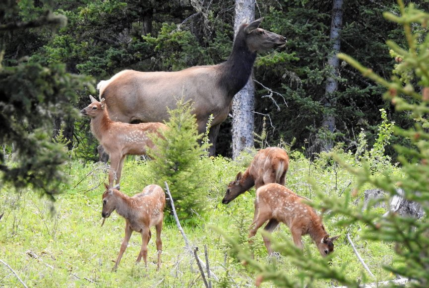 Wildlife in abundance on this Montana ranch for sale