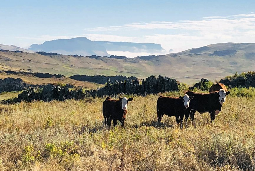 Montana cattle ranch for sale listed by Swan Land Company