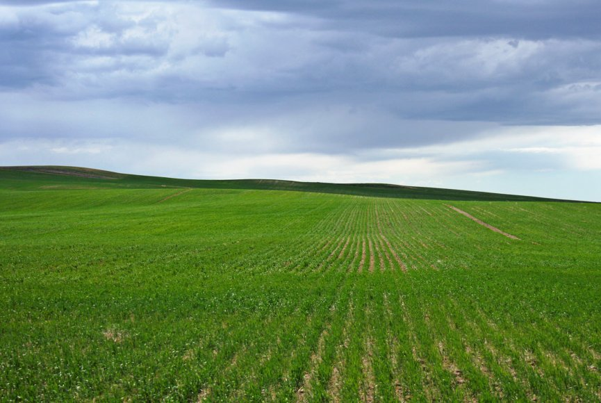 Green lush fields on this large Montana farm for sale