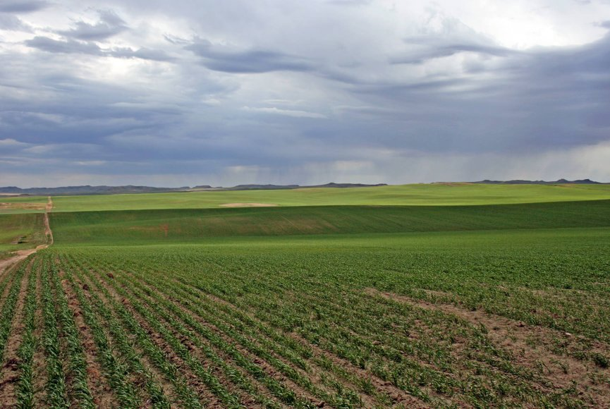 Productive farm land on for sale in eastern Montana