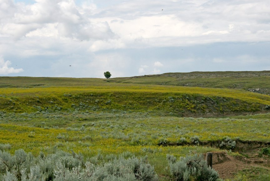 Pure Montana feel in this ranch for sale listed by Swan Land Company