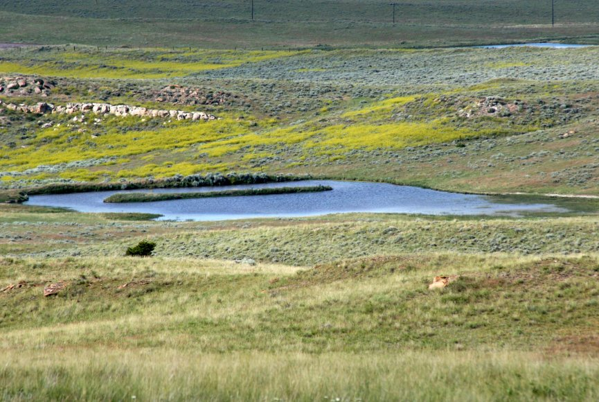 Montana land for sale with a watering hole