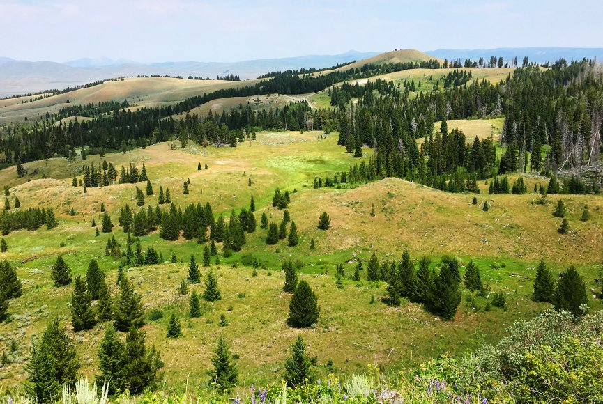 Land for sale on this spacious Montana ranch