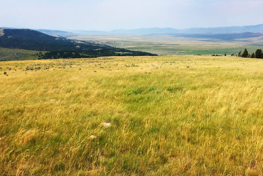The pasture on this Montana ranch for sale is in great condition