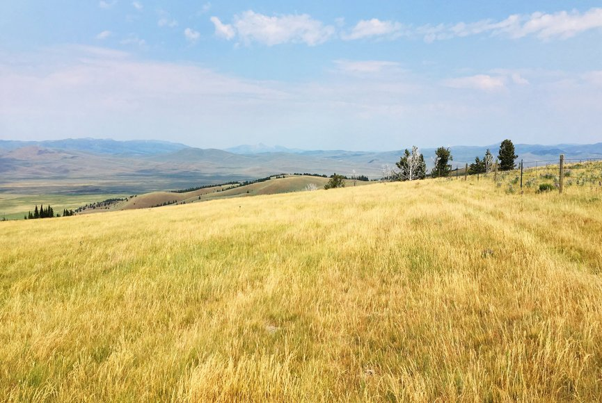 Fields of green sway in the wind on this Montana property for sale