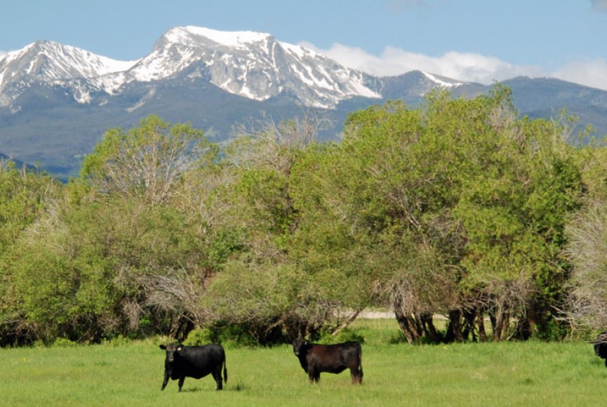 Montana property for sale with beautiful mountain backdrop