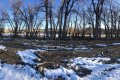 Large stand of trees on this Wyoming property for sale